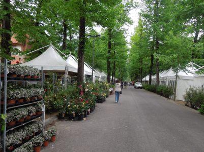 I viali esterni alla mostra - Flora Firenze ha fatto Flop! by unpodimondo