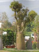 L'interno della Mostra (visto dal Parco delle Cascine) - Flora Firenze ha fatto Flop! by unpodimondo