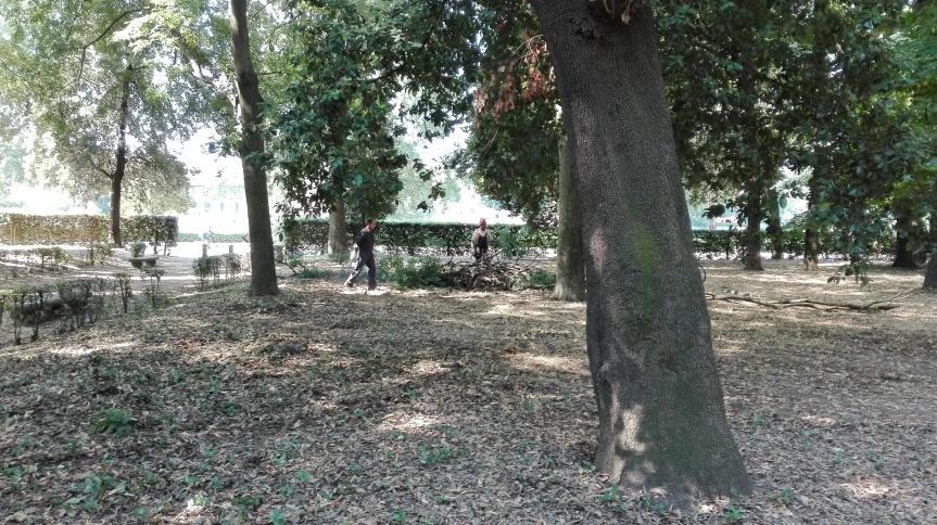 """Foto """"Gli operai del Comune di Firenze che Sabato 2 Luglio rimuovono gli ultimi esti dell'albero crollato al Parco delle Cascine"""" by unpodimondo."""